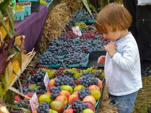 grapes NE wine fest Anna McCartney